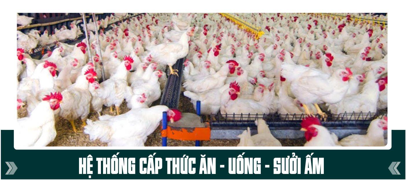 hệ thống cấp thức ăn, nước uống, sưởi ấm trang trại gà vịt